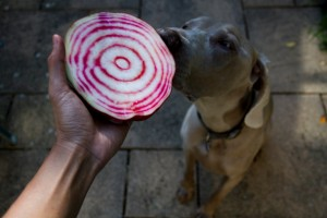 Candy Beetroot and Dog