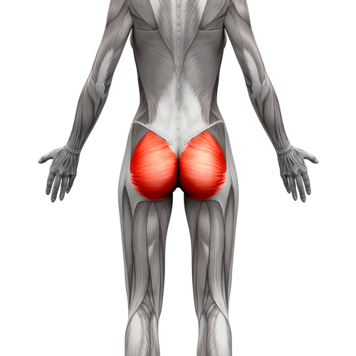 Glutes Isolated